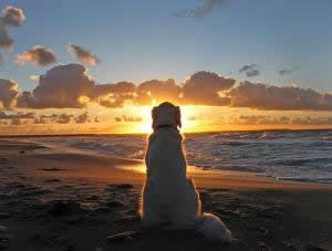 dog looking at sunset
