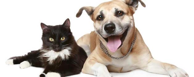 Pet Safety Pet Wellness Pet Illness and Treatment Animal Safety Pet ...