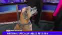 video - National Specially-Abled Pets Day