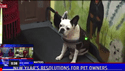 video - New Year Resolutions for pets
