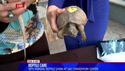 video - Reptile Care